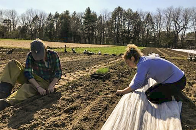 Nina and Margaret planting onions