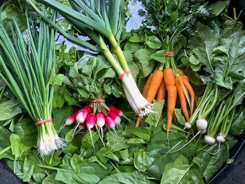 A look at this week's CSA harvest