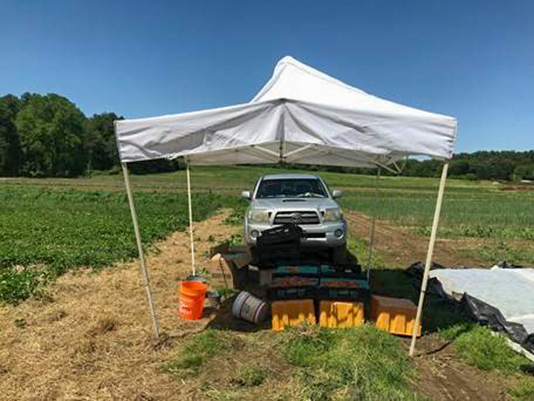 A little shade for freshly harvested produce