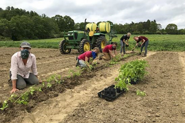 Crops Team Planting Tomatoes