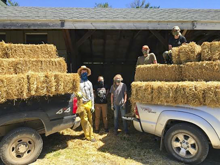 Stacking straw bales for mulching