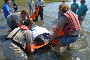 WBWS Staff Assists with Stranded Leatherback at Sandy Neck