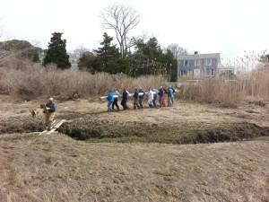 Team crosses two salt marsh creeks to bring pole to site