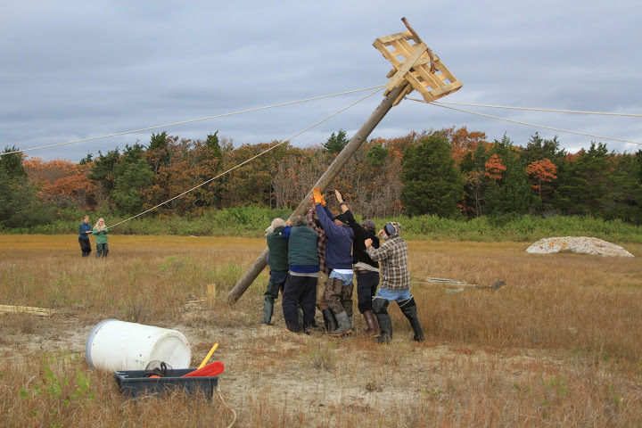Raising new pole (photo: Mark Faherty)