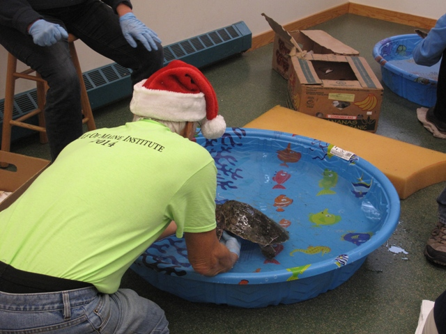 "Volunteer Bob ""Santa"" Myslik at the turtle pool"