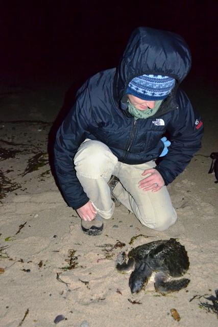 Night turtle patrol