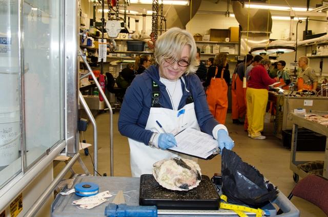 WBWS Volunteer Janet Drohan, courtesy of Karen Strauss