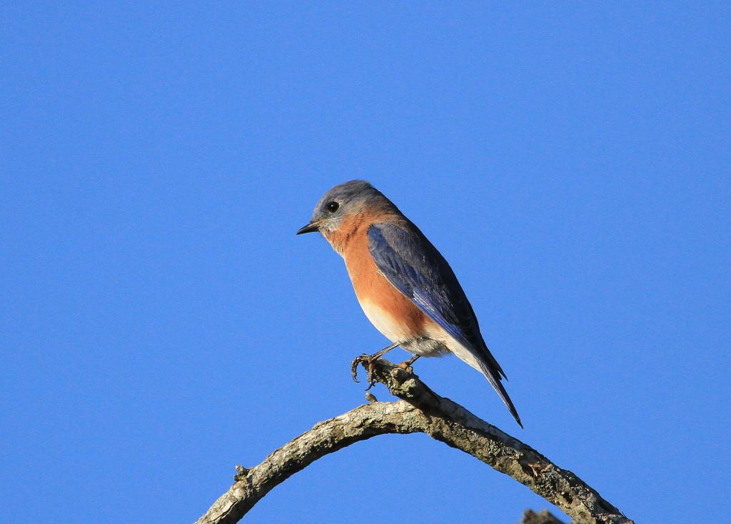 Bluebird by Mark Faherty