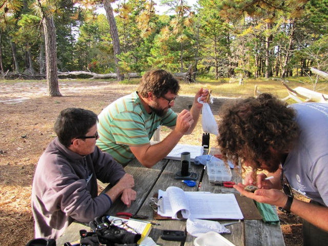 The bird banding crew (left to right): Mary Lou, James and Dan.