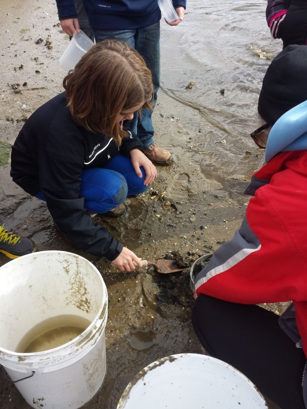 Carefully collecting mud snails at Herring River (photo by Sheila Hoogeboom).