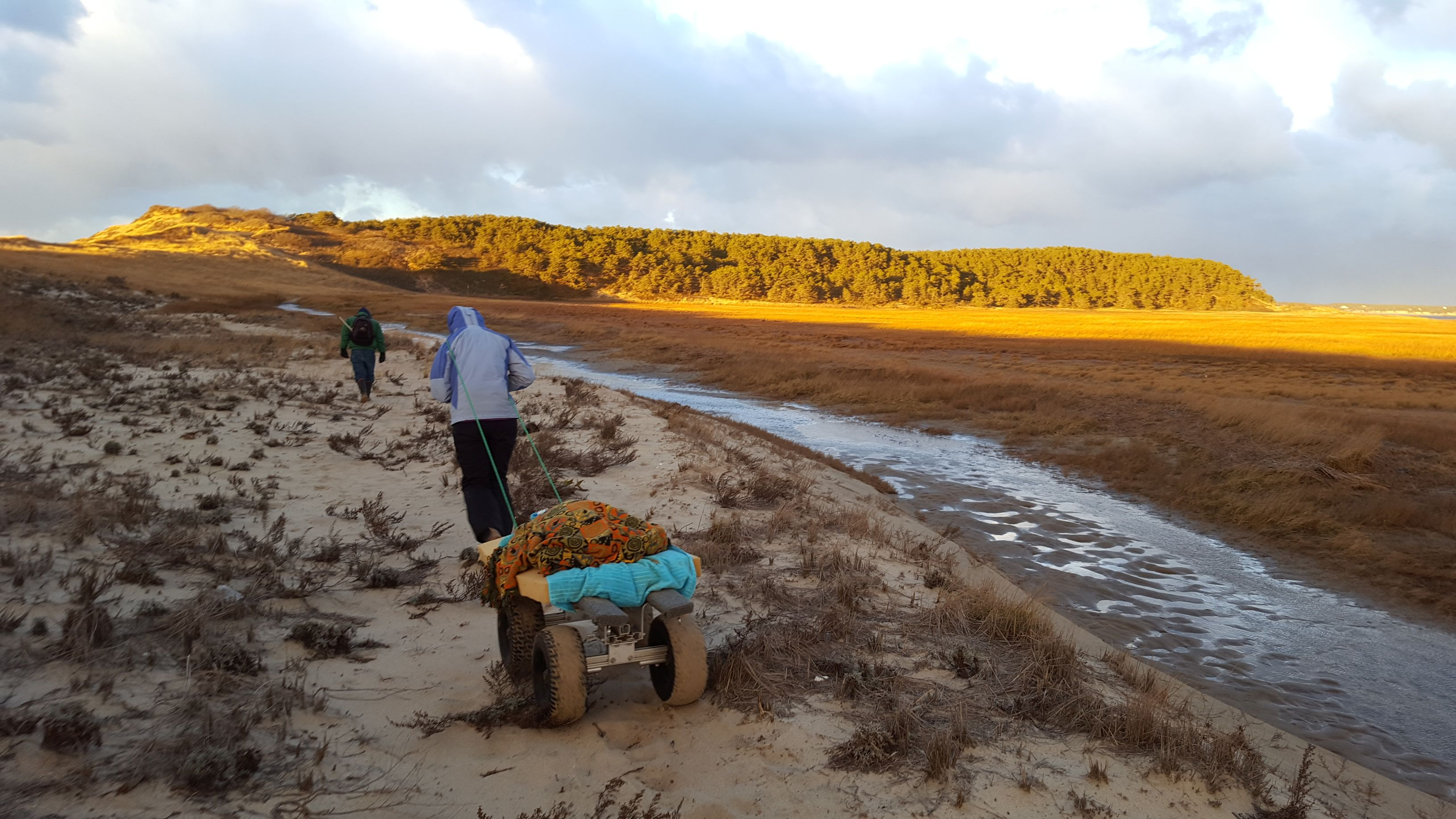 Rebecca haules the turtle cart loaded with an 80 pound loggerhead. Thanks to volunteer Bruce Hurter (dark figure ahead of Rebecca) the team was able to avoid the blast of the northwest wind by walking behind the dunes. (photo by Olivia Bourque)
