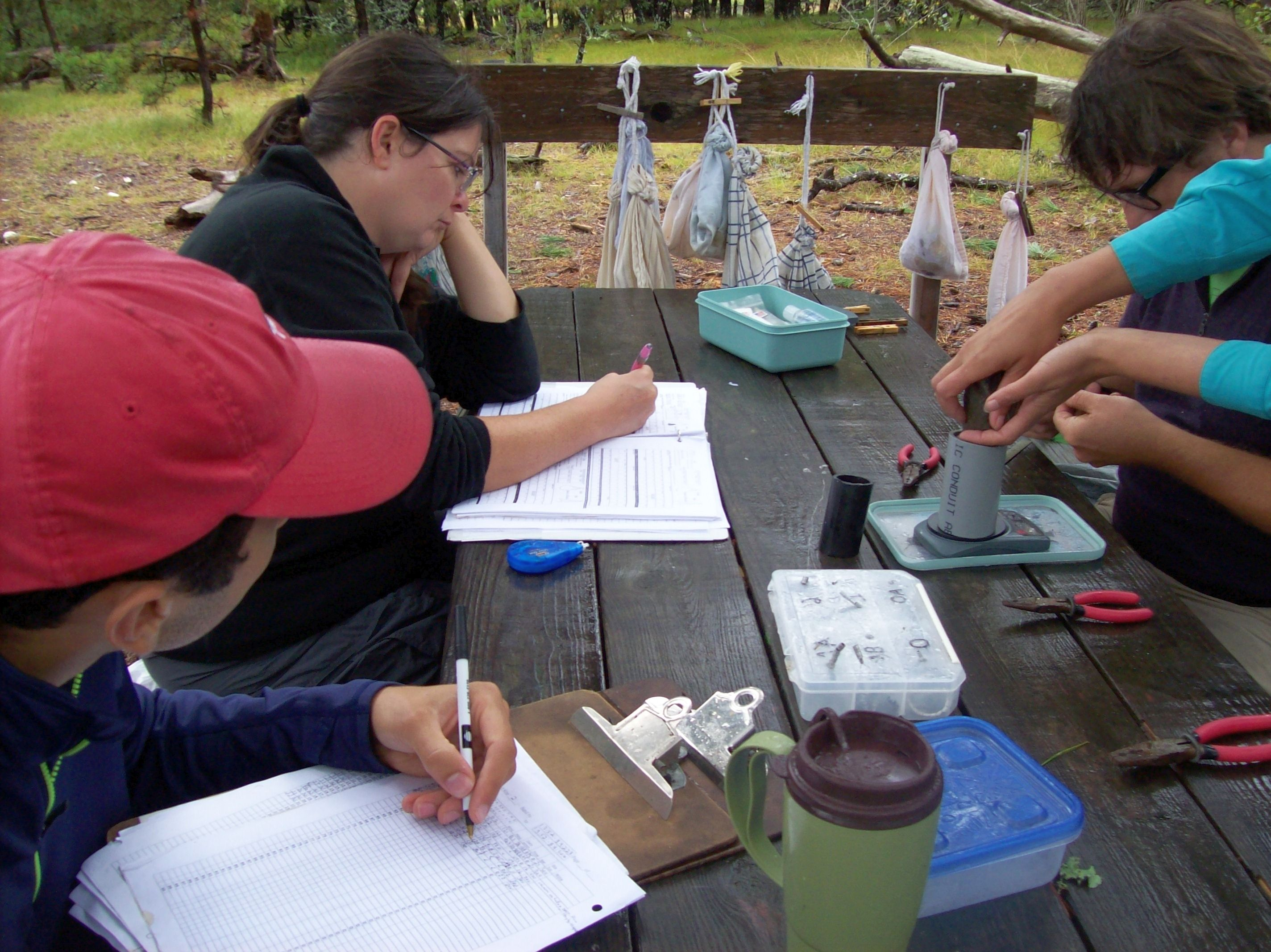 Fall Bird Banding Summary: the News in the Numbers   Field