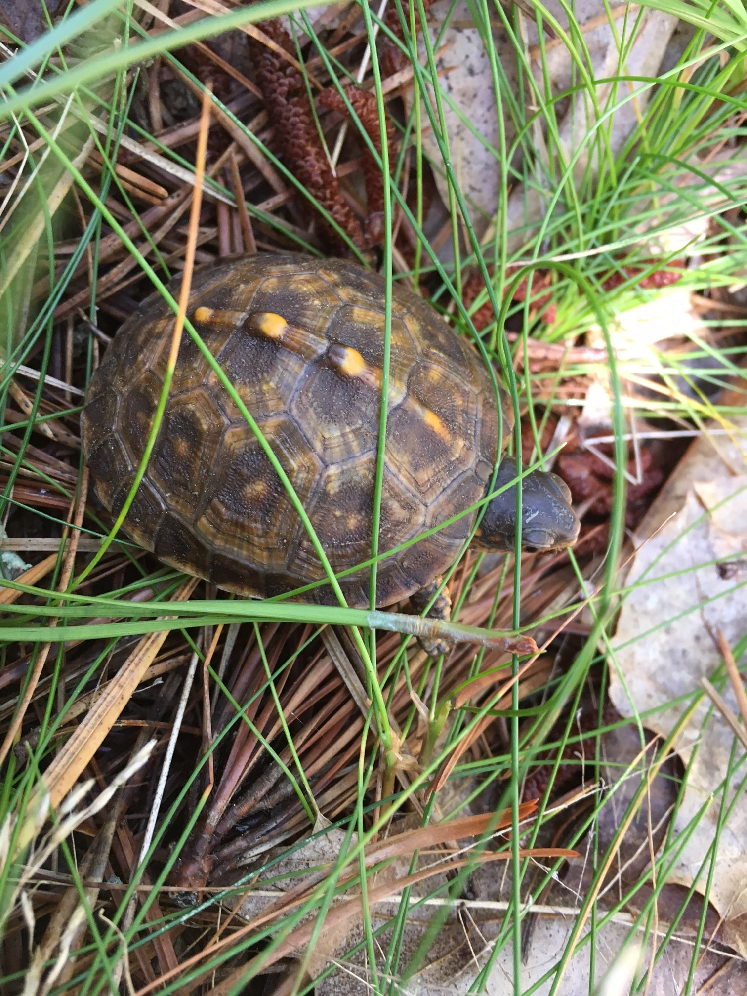 field notes citizen science at wellfleet bay a mass audubon blog