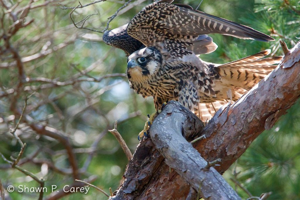 City Birds Visit The Wide Open Spaces Of Wellfleet Bay Field Notes