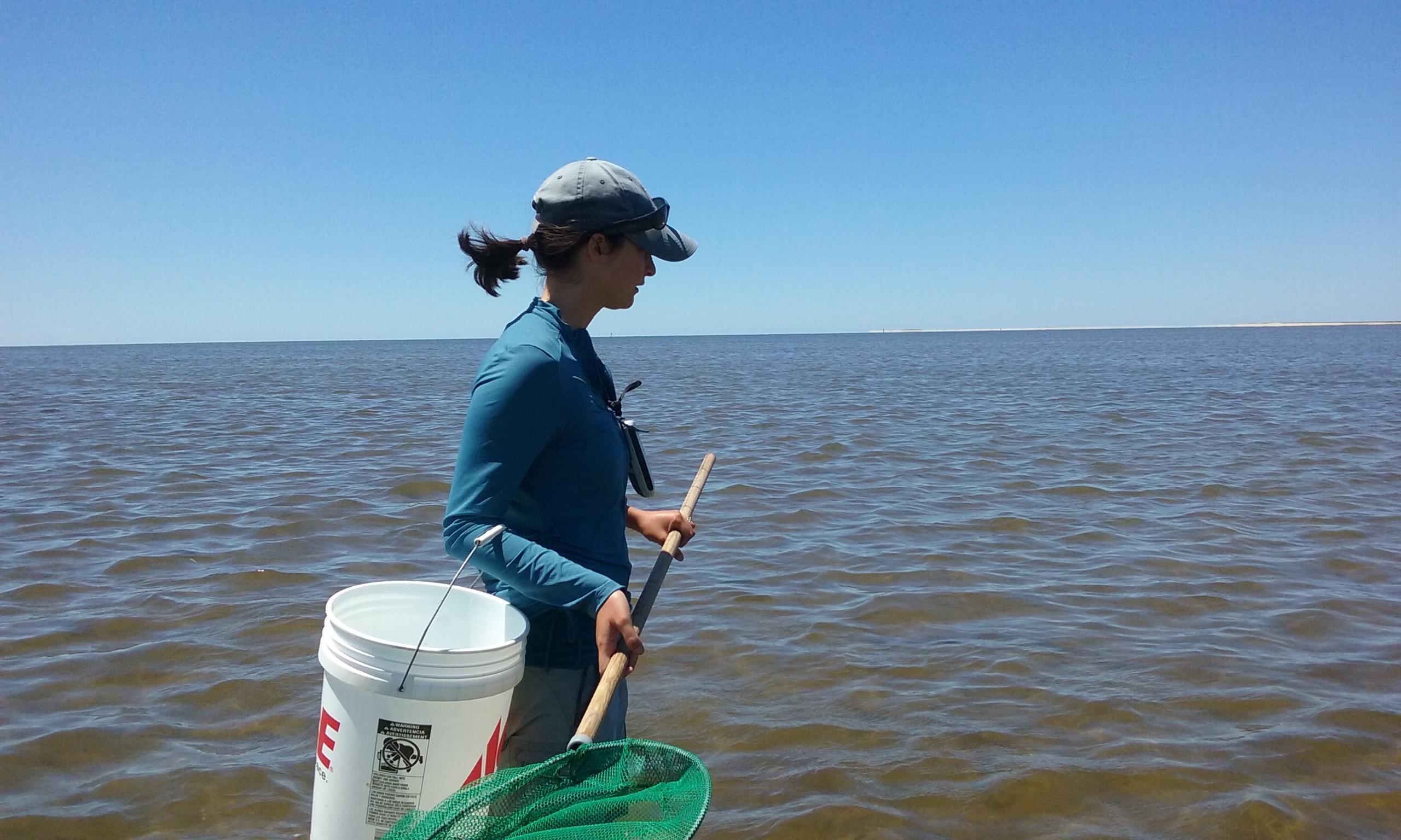 Field Notes: Citizen Science at Wellfleet Bay | A Mass Audubon Blog