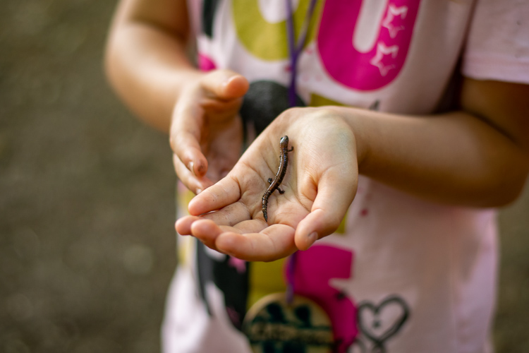 Discovering a red-backed salamander