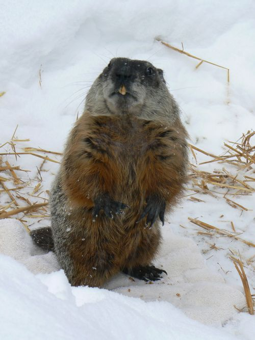 A Closer Look At Groundhog Day Your Great Outdoors