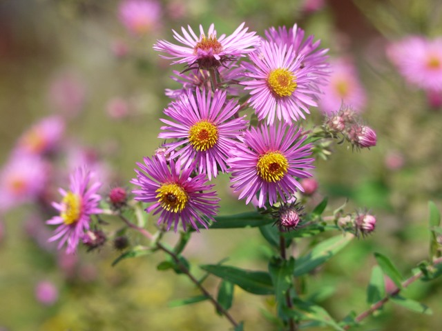 Four Fall Flowers Your Great Outdoors