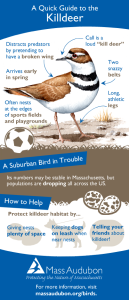 Quick Guide to Killdeer