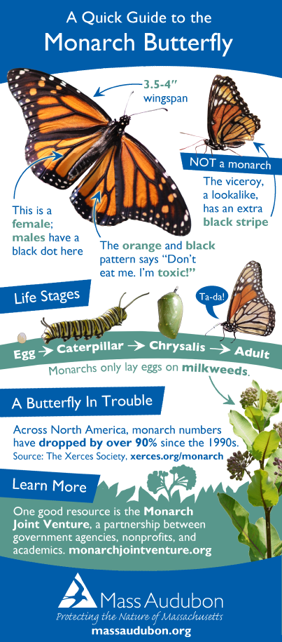 A Quick Guide to Monarchs