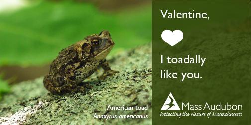 valentine_toad2