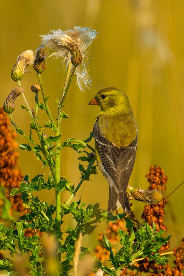 2012 Photo Contest Entry © Sash Dias