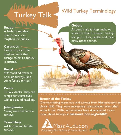 infographic_turkey