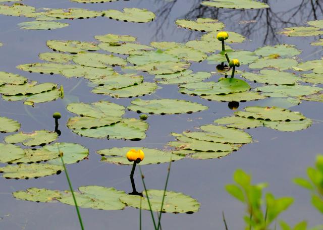 Canoe Meadows, 2015 Photo Contest Entry © Stephen Maggio