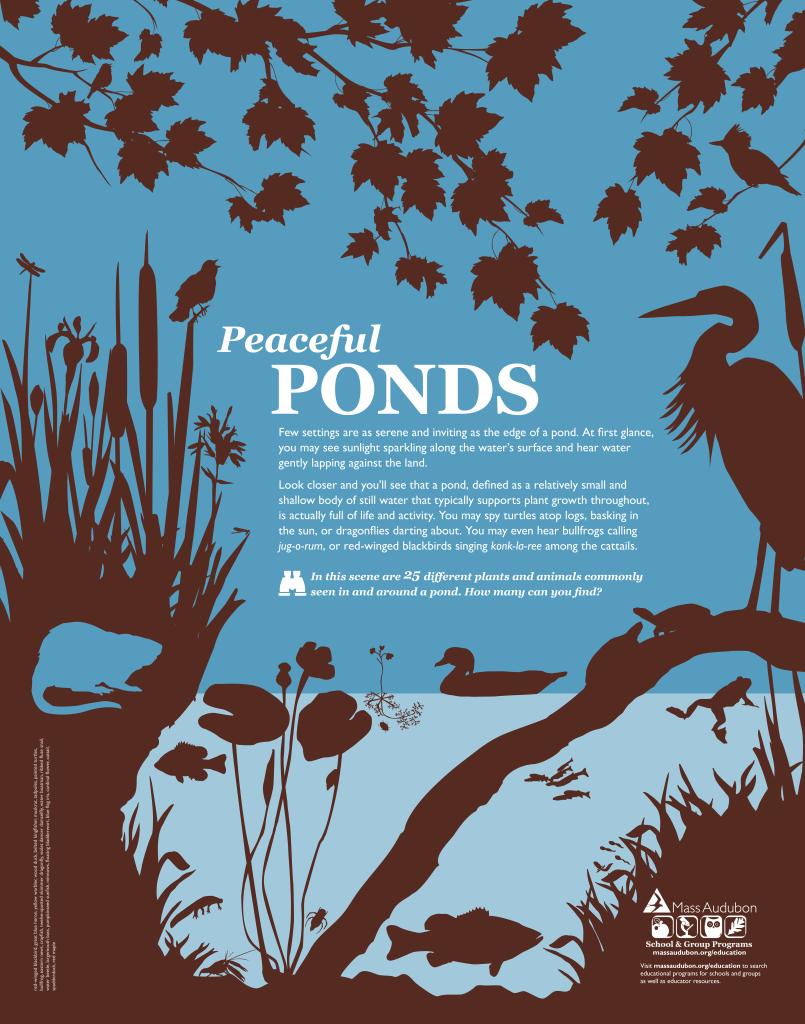 POND_poster
