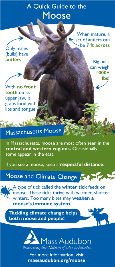 moose-quick-guide