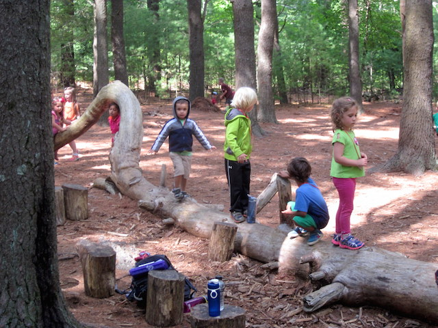 pine forest play
