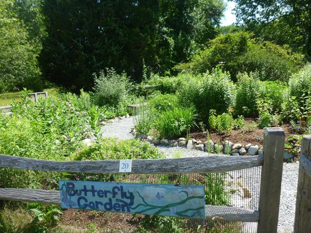 The Butterfly Garden at Stony Brook Wildlife Sanctuary