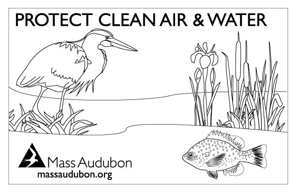 Your Great Outdoors | A Mass Audubon Blog | Page 35