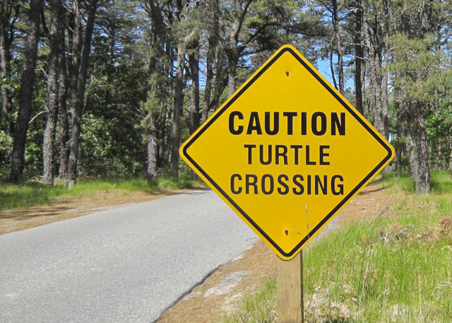 Turtle Crossing sign at Wellfleet Bay Wildlife Sanctuary