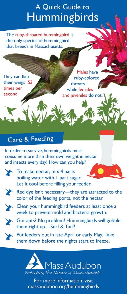 Hummingbird Quick Guide
