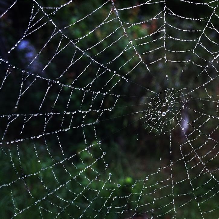 Spider Web © Ian Kinahan