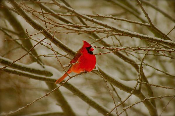 Cardinal Barbara VanDingstee