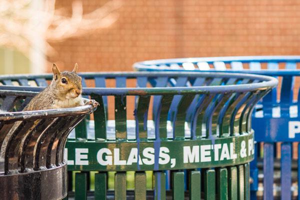 Grey Squirrel © Eileen Leary