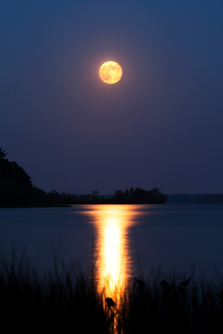 Harvest Moon © Rod Delano