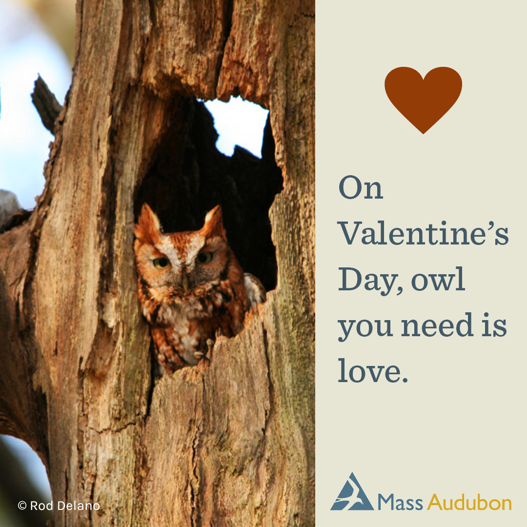On Valentine's Day, owl you need is love.