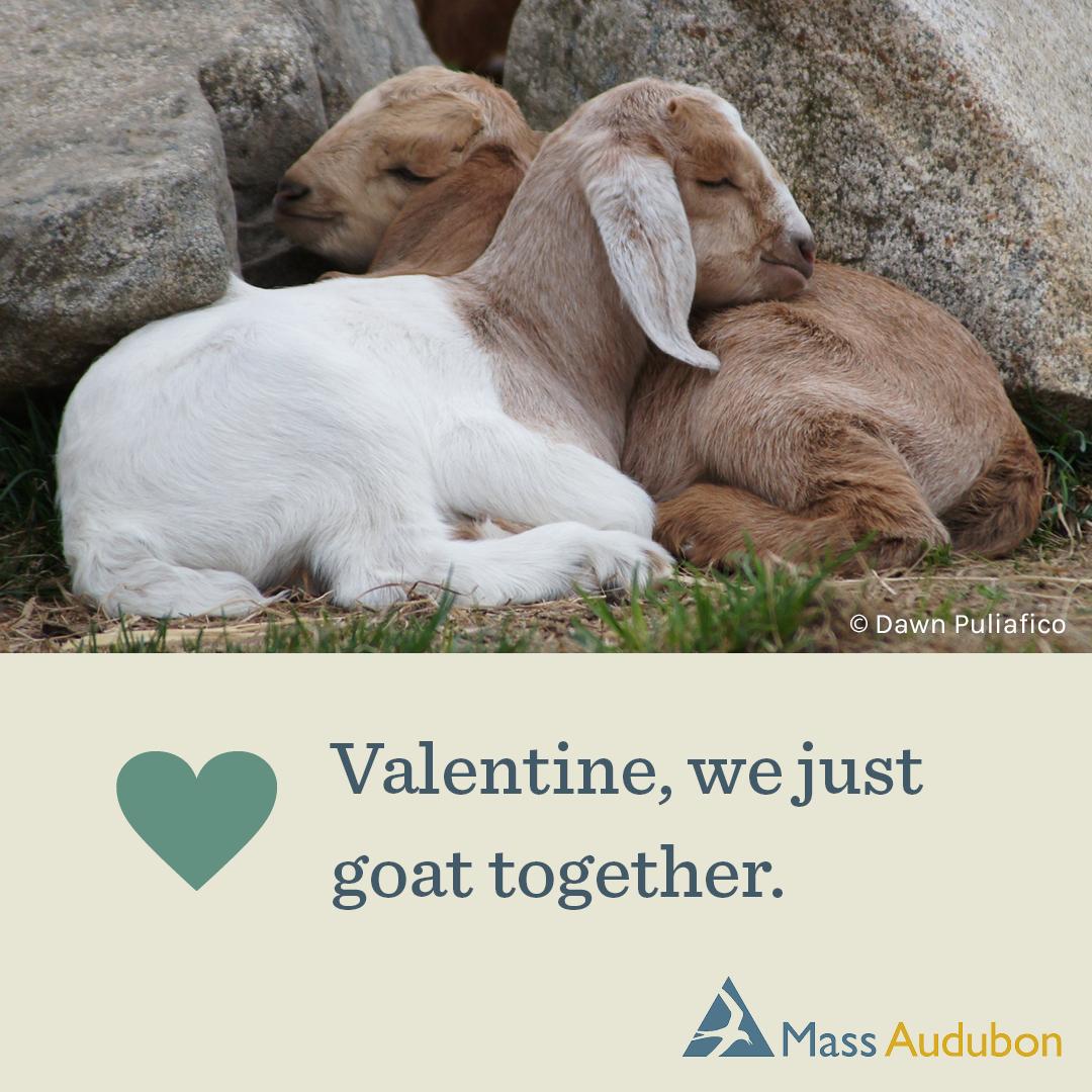 Valentine, we just goat together.