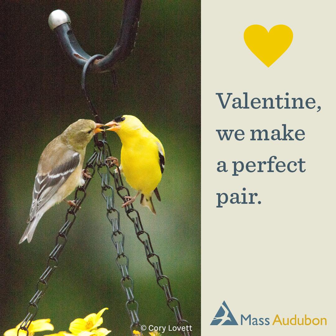 Valentine, we make a perfect pair.