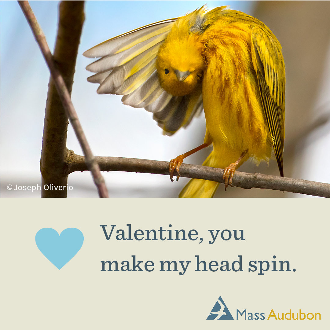 Valentine, you make my head spin.