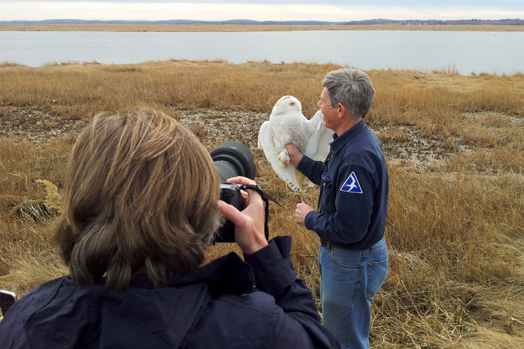 Norman Smith Releasing a Snowy Owl © Christopher Blood