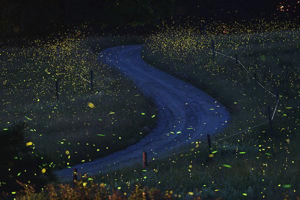 Nighttime Fireflies JS Mcelvery