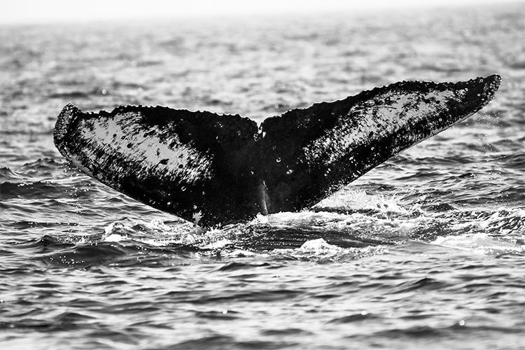 Mammals Under 18 Winner © Jordan Kanes