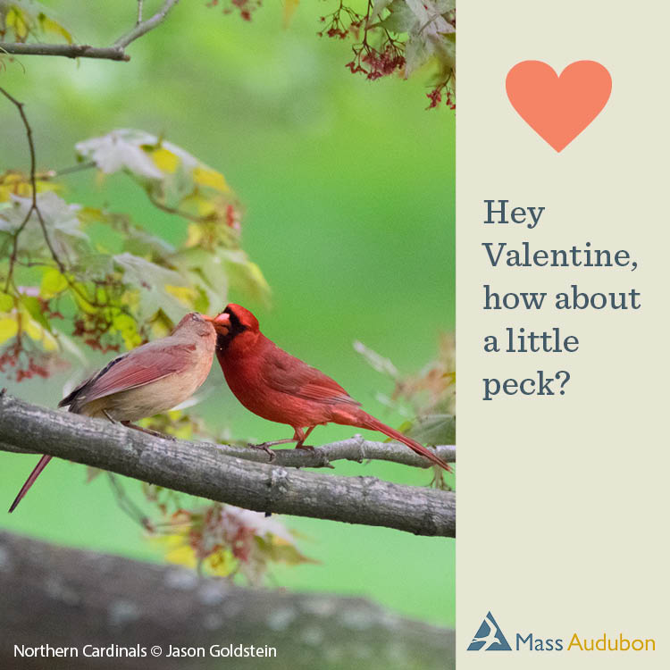Hey Valentine, How About A Little Peck?