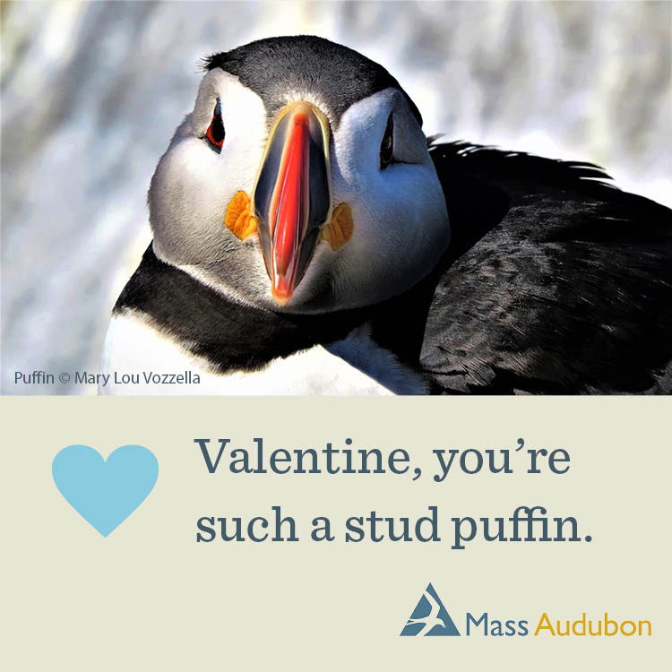 Valentine, You're Such a Stud Puffin