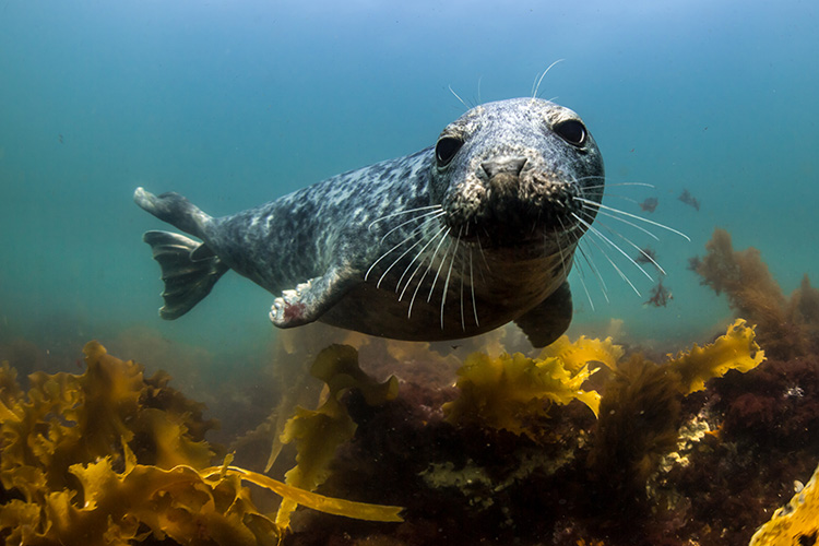 Harbor Seal Pup © Alex Shure