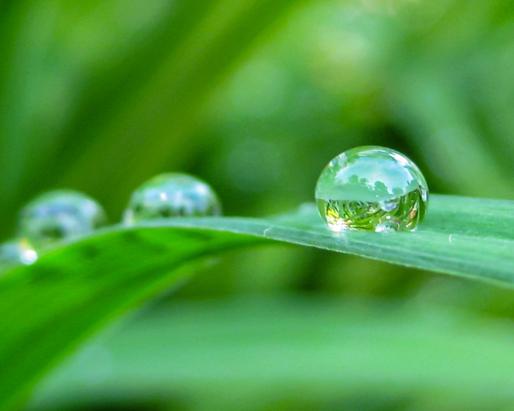 Water beaded along a blade of grass © Heather Armata